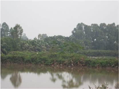 Bảo tồn và phát triển hệ sinh thái ngập nước ven biển Thái Thụy